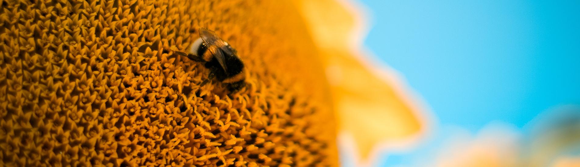 Quince Honey Farm, South Molton